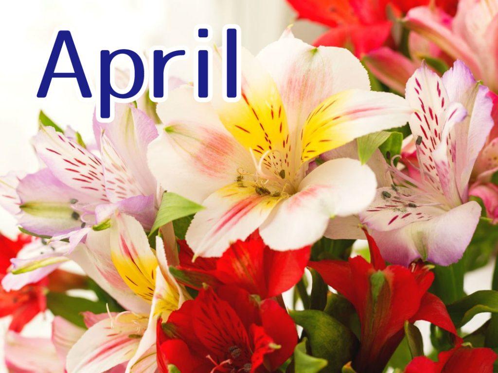 4月のキャンペーン
